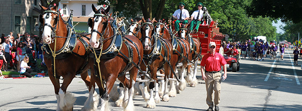 clydesdales_parade_landing