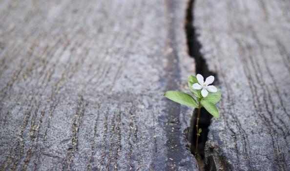white flower growing on crack street, soft focus